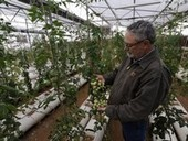 Big Country Journal: Nothing fishy about Munday man's organic farm - ReporterNews.com | Growing Food | Scoop.it