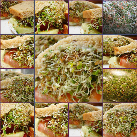The Healing Wonders of Alfalfa | Health and Wellness | Scoop.it