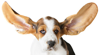 The Pet Corner: Diagnostic tests are worthwhile - Central Kentucky News | Veterinary News | Scoop.it
