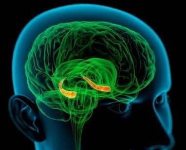 How Human Brains Could Be Hacked | Budoucnost | Scoop.it