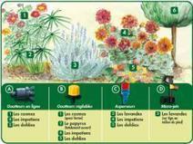 Arrosage Goutte A Goutte Pour Votre Jardin : de quoi s'agit-il ?   Tout pour le jardin   Scoop.it