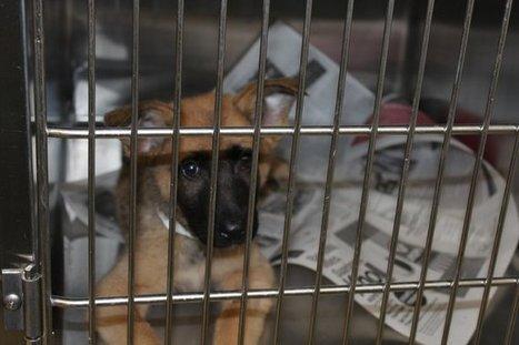 Husband of pet store owner abandons sick puppies   Northern Puppies Saga   Scoop.it