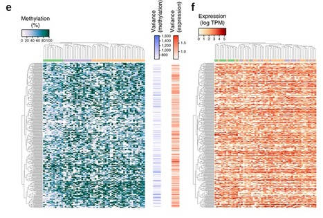 Parallel single-cell sequencing links transcriptional and epigenetic heterogeneity. - PubMed - NCBI | Single cell genomics and transcriptomics | Scoop.it