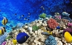 U.N. Aims to Protect More of the High Seas   Greenconflict Solutions   Scoop.it