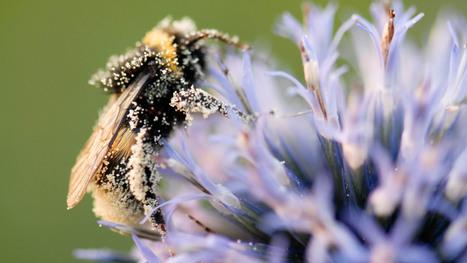 Les insectes pollinisateurs nous en mettent plein la vue - Ministère de l'Environnement, de l'Énergie et de la Mer | apiculture 2.0 | Scoop.it