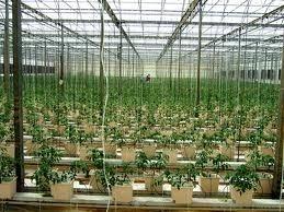 Despite Economic Hurdles and Learning Curve, Family's Hydroponic / Aquaponic Enterprise Turns Profit | Organic Farming | Scoop.it