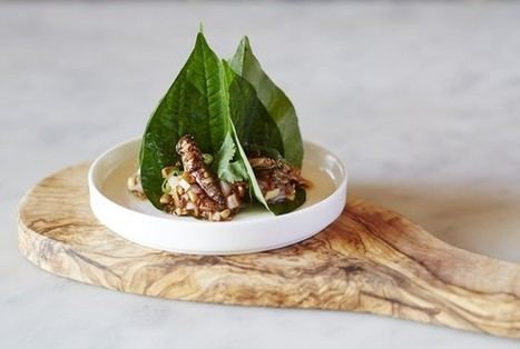 Grub's up: Eat insects at Wakehurst Place this weekend | Entomophagy: Edible Insects and the Future of Food | Scoop.it