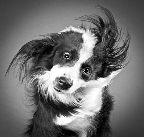 Portraits of Dogs as They Shake Off Water - PetaPixel | My Favs on Web | Scoop.it