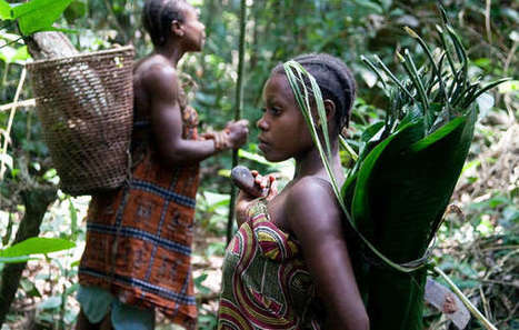 Survival International accuses WWF of involvement in violence and abuse | great buzzness | Scoop.it