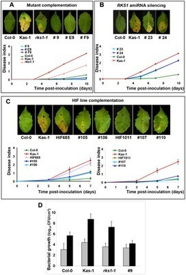 PLOS Genetics: An Atypical Kinase under Balancing Selection Confers Broad-Spectrum Disease Resistance in Arabidopsis | Plant genetics | Scoop.it