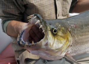 Fishing with Social Media - Marketing Strategist | Byron SEO & Marketing | Scoop.it