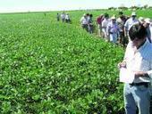 El ataque a las malezas debe darse a tiempo - La Gaceta Tucumán | Herbicidas | Scoop.it