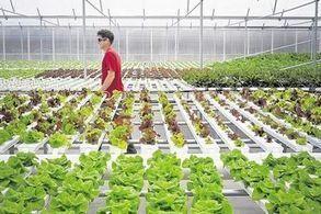 New Windsor organic grower plans $5.7M expansion | Urban Aquaponics Farm | Scoop.it