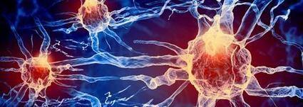 Enhancing Brain Health with Acetyl L Carnitine and Alpha Lipoic Acid | Glutathione | Scoop.it