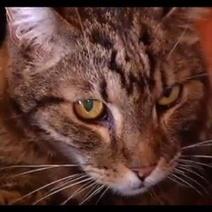 Incroyable : un chat retrouve sa famille 13 ans après sa disparition   Vétérinaire assistante   Scoop.it