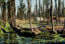 Urban Agriculture: the Chinampas of Mexico | eatcology.comeatcology | Organic Farming | Scoop.it