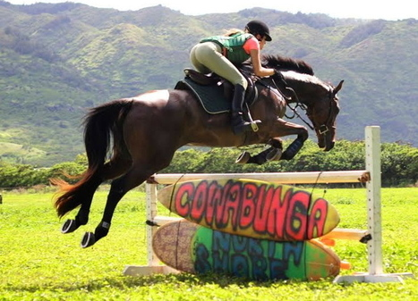 In Hawaii a hot Thoroughbred is now a cool sport horse | Horse Racing News | Scoop.it