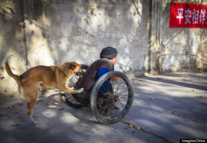 Fiercely Loyal Canine Helps Push Its Paralyzed Owner Through The Streets In China | Walking On Sunshine | Scoop.it