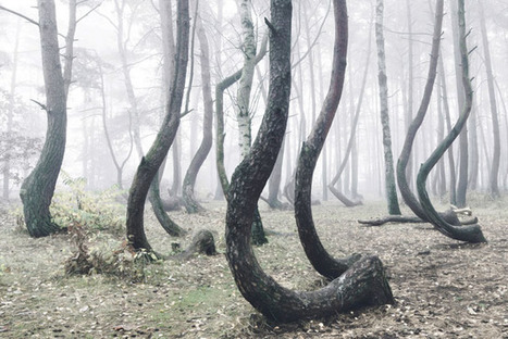 Photos of the Strange 'Crooked Forest' in Poland | xposing world of Photography & Design | Scoop.it