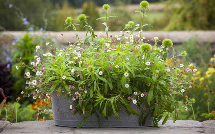 How to create a show-stopping summer flower container | Container Gardening | Scoop.it