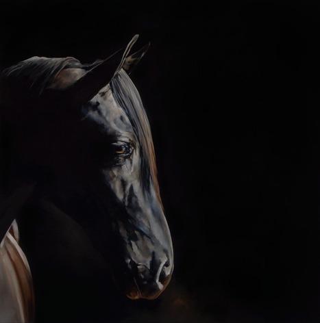 Night Horse: Jasper | Horse Care | Scoop.it