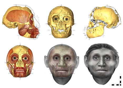 The Flores Hobbit's face revealed | Neuroanthropology | Scoop.it