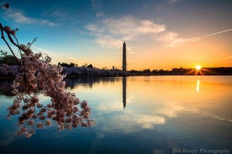 Breathtaking Photos Show Why Thousands Flock to D.C. to See Annual Cherry Blossom Festival | Inspirational Photography to DHP | Scoop.it