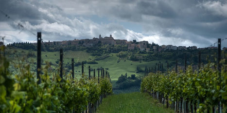 Vinepair's Guide To The Wines Of Le Marche | Wines and People | Scoop.it