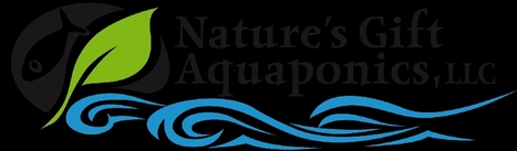 Nature's Gift, a certified aquaponic farmer featuring Black Nile Tilapia and Asian Produce. Nestled in Morgantown, Indiana. | Aquaponics World View | Scoop.it