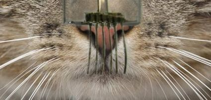 Des capteurs tactiles aussi sensibles que des moustaches de chat | Nouvelles Interactions | Scoop.it