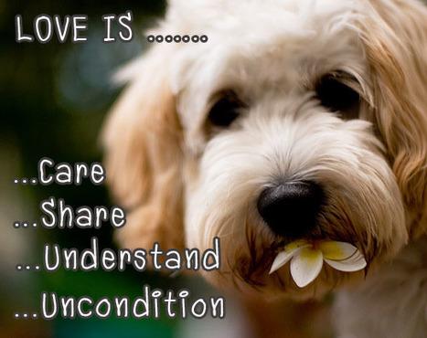 Love .....   Meawwwww   Scoop.it