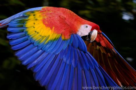 Persistence Series – Creating the image – Flying Macaws | Fujifilm X Series APS C sensor camera | Scoop.it