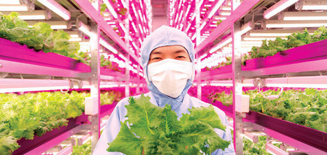 Japan's Answer to Radiation: Massive Natural Indoor Farms   FarOutRadio with Scott Teeters   Scoop.it