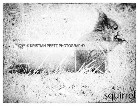 Squirrel | All things about Photography | Scoop.it