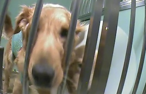 Défense des animaux de laboratoire - Leetchi.com | Modern dog training methods and dog behavior | Scoop.it