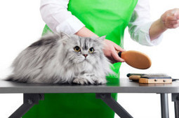 Why cat grooming is important? | A1 pet grooming in Brooklyn NY by Paws N Claws Grooming & Access | Scoop.it