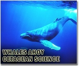 Conservationists, big oil join forces to help whales | Sustain Our Earth | Scoop.it