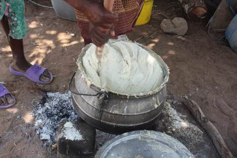 As temperatures soar, Zimbabwe's farmers test maize that can cope | Thomson Reuters Foundation | CGIAR Climate in the News | Scoop.it