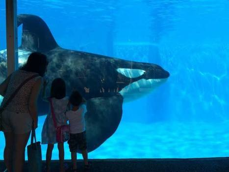 Urge the Dubai Government to Keep SeaWorld Out! | Nature Animals humankind | Scoop.it