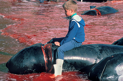 Sea Shepherd | Nature Animals humankind | Scoop.it