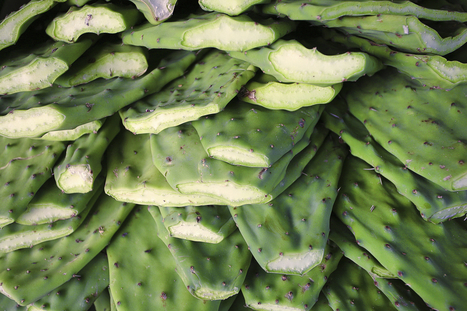 The Wild and Native Foods We Should Be Eating | Radiant Health | Scoop.it