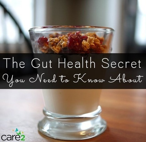 Probiotics Alone Won't Give You A Healthy Gut You Need Prebiotics Too | Care2 Healthy Living | Plant Based Transitions | Scoop.it