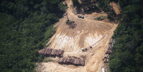 Nouvelle alerte sur l'état de santé de l'Amazonie | Confidences Canopéennes | Scoop.it