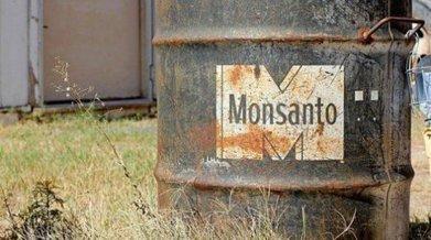 Monsanto cherche à créer des abeilles transgéniques | Code Planète | Scoop.it