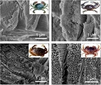 Crab Shells Help Researchers Make New Battery Materials | Chemical & Engineering News | The Frontier | Scoop.it