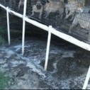 Iowa shutters Pratt puppy mill, but what took so long - ChicagoNow (blog) | ALS Animals | Scoop.it