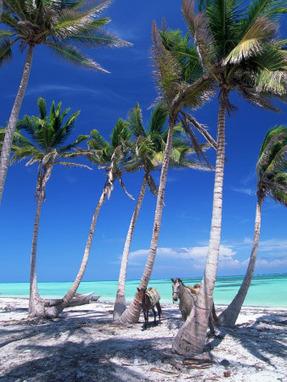 Dominican Republic All Inclusive Resorts | World Travel News | Scoop.it
