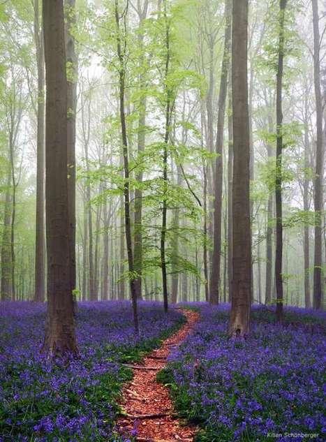 Il existe une forêt digne des contes de fées... en Belgique ! | TransEuropeEscape | Scoop.it