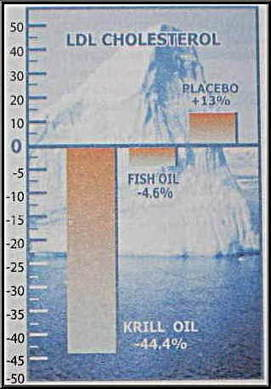 How To Lower Cholesterol - Krill Oil Benefits | Cholesterol: Advances-Knowledge, integrative, holistic treatments | Scoop.it