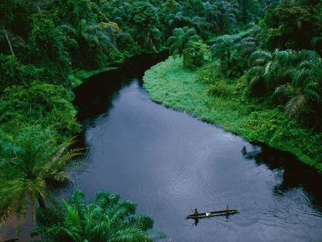 Top 10 Most Beautiful Tropical Rainforests | Forest uniqueness's | Scoop.it